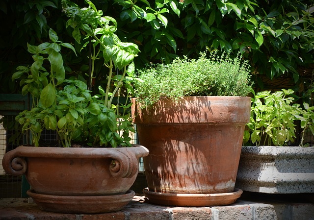 Силата на Босилека за здраве, красота и вкусна храна