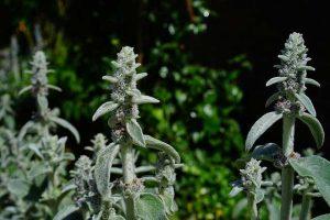 Най-ефикасните билки за усилване на имунната система