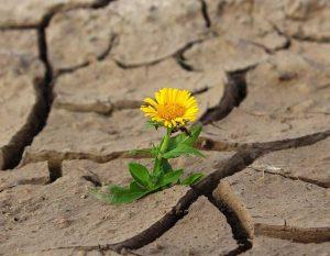 cvete v pustinqta - tarpenie