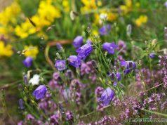 letni bilki i cvetq