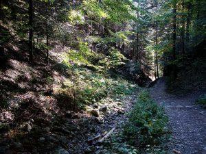 puteka v gorata okolo burgas