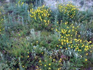 letni bilki i cvetq v balkana