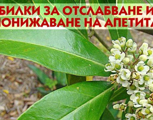 Топ 10 билки за понижаване на апетита